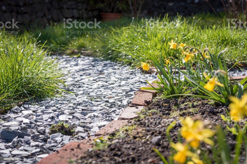 Bloemen op de neus - Royalty-free Aangelegd Stockfoto