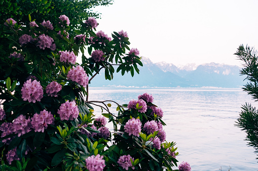 Flowers on the Montreux quay