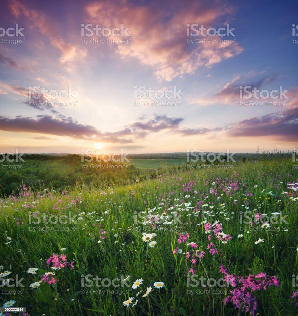 Blumen auf dem Berg bei Sonnenaufgang. Wunderschöne Naturlandschaft in der Sommerzeit – Foto