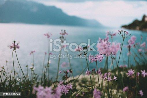 istock Flowers on the shore of Lake Geneva 1280003274