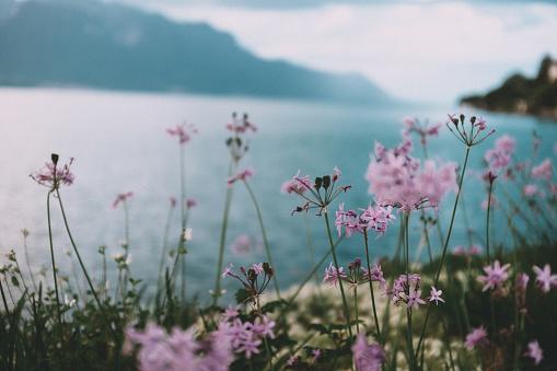 Flowers on the shore of Lake Geneva