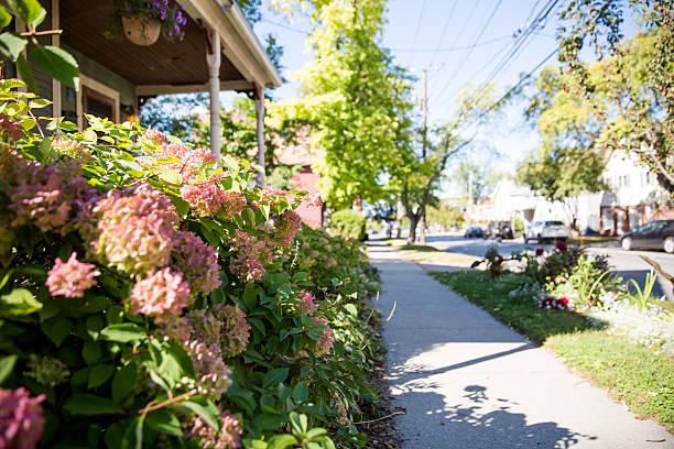 Flowers on the sidewalk stock photo