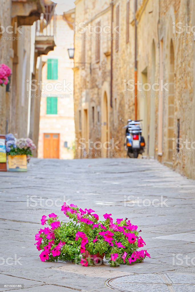 Flowers on the tarmac of Pienza, symbol environmental conflict Lizenzfreies stock-foto