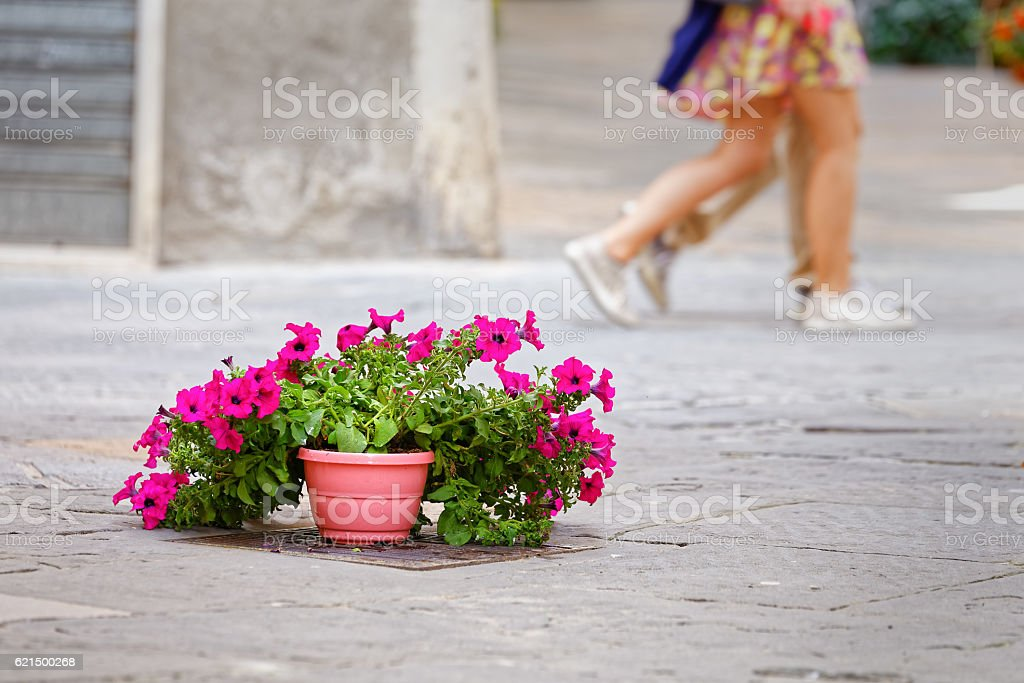 Flowers on the tarmac of Pienza, symbol environmental conflict foto stock royalty-free