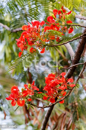 istock flowers on the tree 653731540