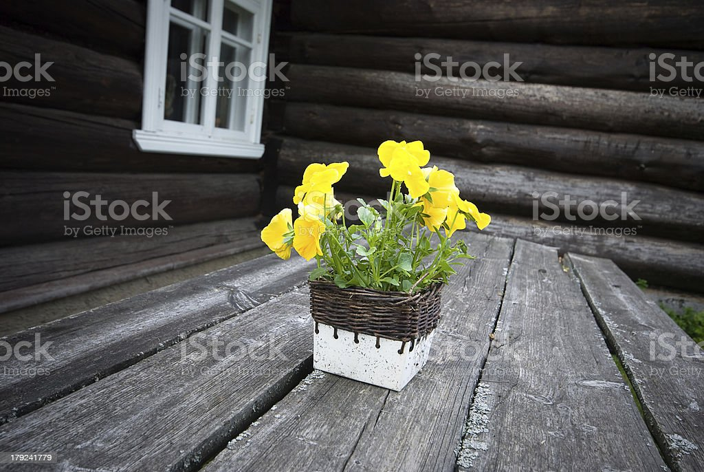 flowers on the tree table stock photo