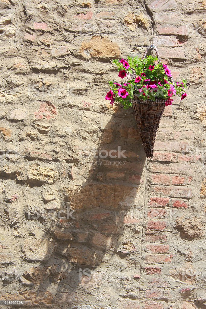 Flowers on the wall stock photo