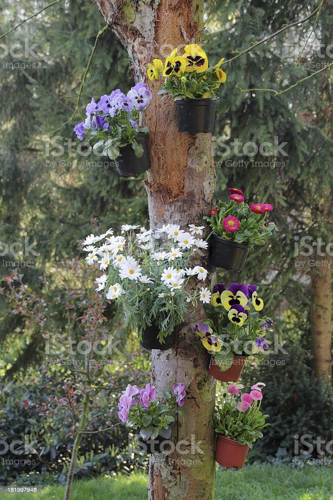 flowers on tree stock photo