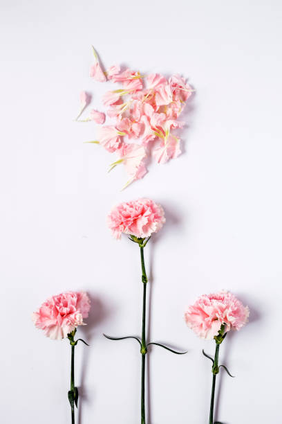 Flowers on white background flat lay top view picture id655689268?b=1&k=6&m=655689268&s=612x612&w=0&h=whyj66j0xz3vfnatjgopssbn2dvamaqw lnmpxg 1zg=