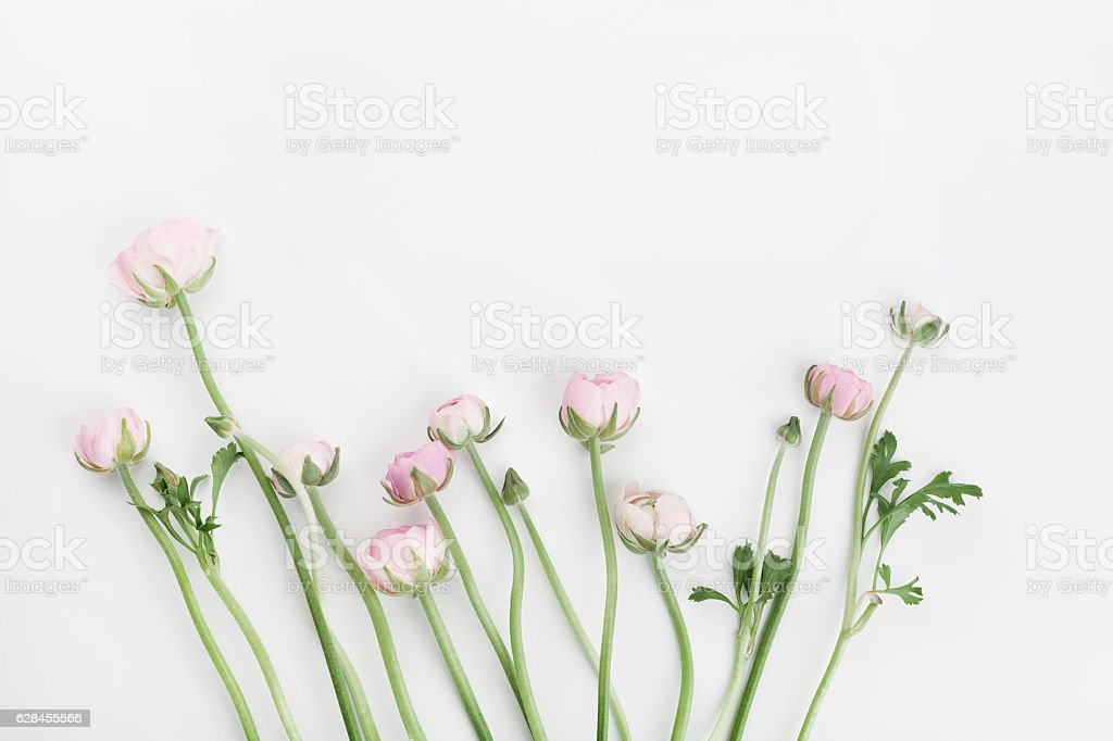 Flowers on white background. Floral border. Wedding mockup. Flat lay. stock photo
