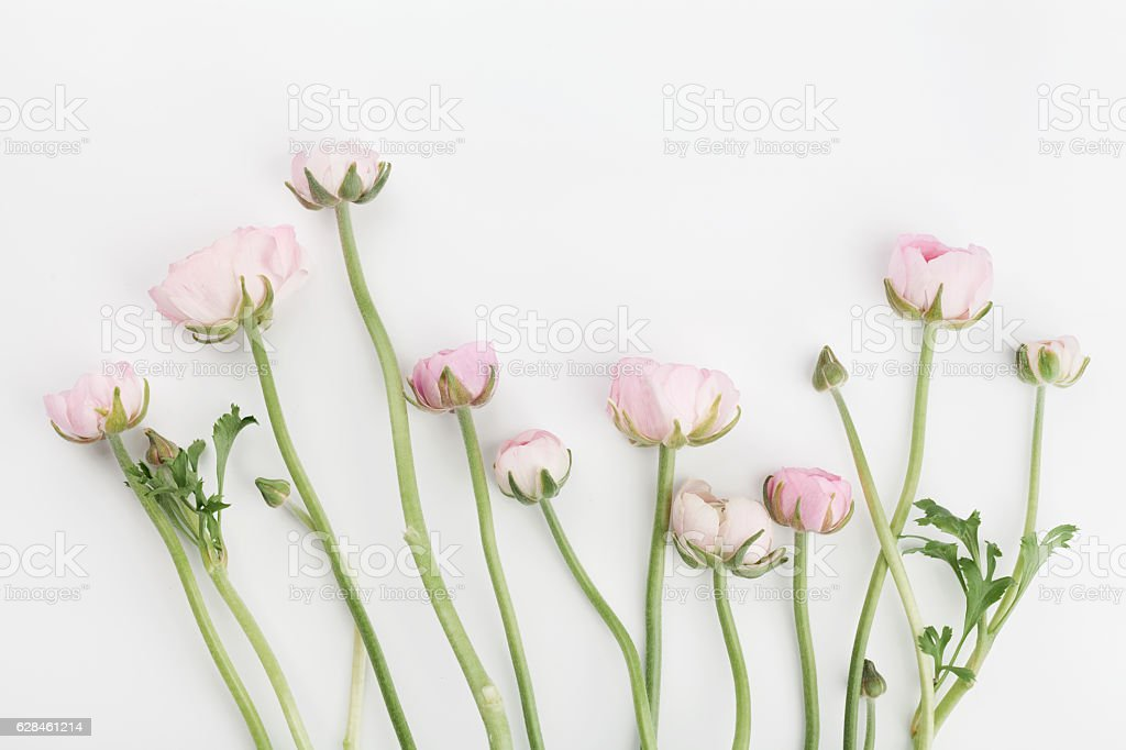 Flowers on white background. Floral border. Wedding mockup. Flat lay. – Foto