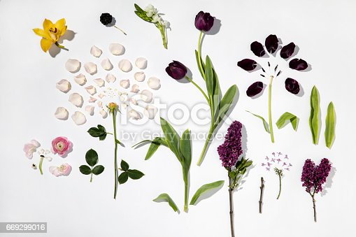 istock Flowers on white background 669299016