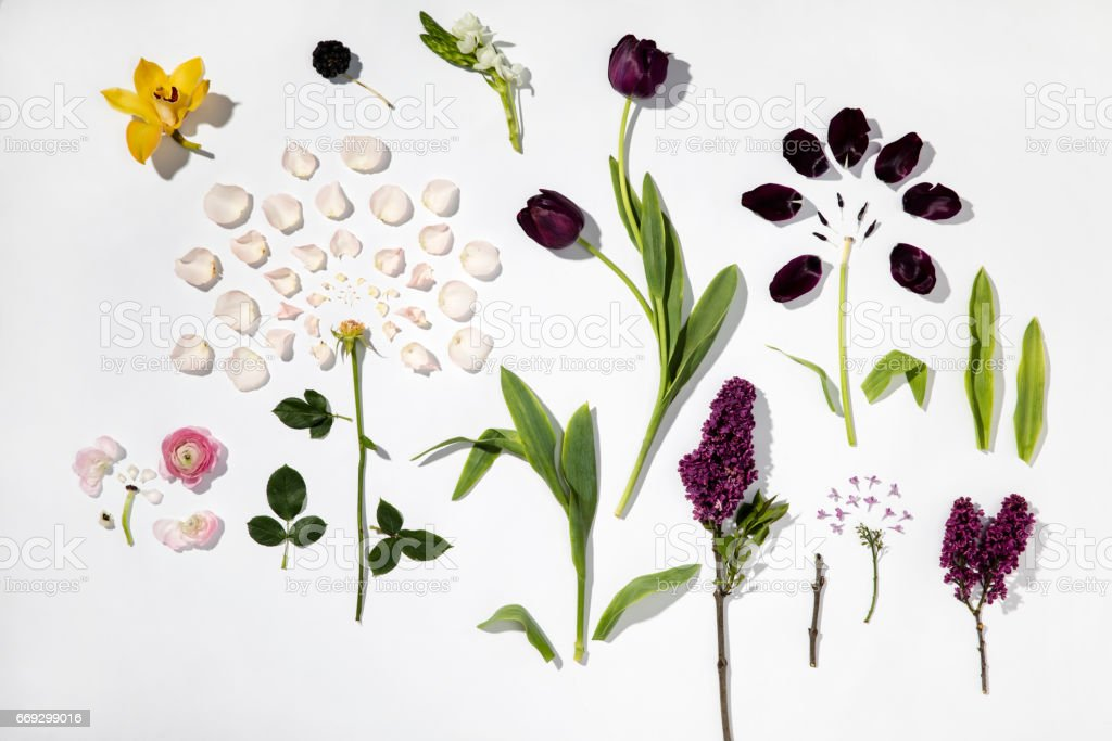 Flowers on white background stock photo