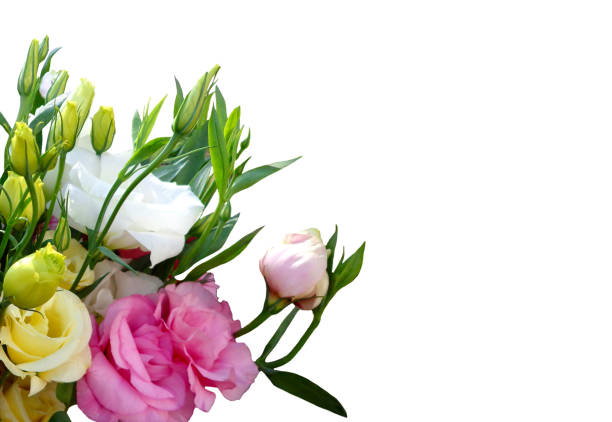 Flowers on white background picture id880385662?b=1&k=6&m=880385662&s=612x612&w=0&h=rvmna3cowmezmj3tpox nvoeiz2l9kchrf26f8hymgy=