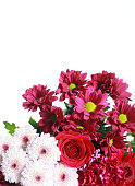 Bunch of flowers on a white background.