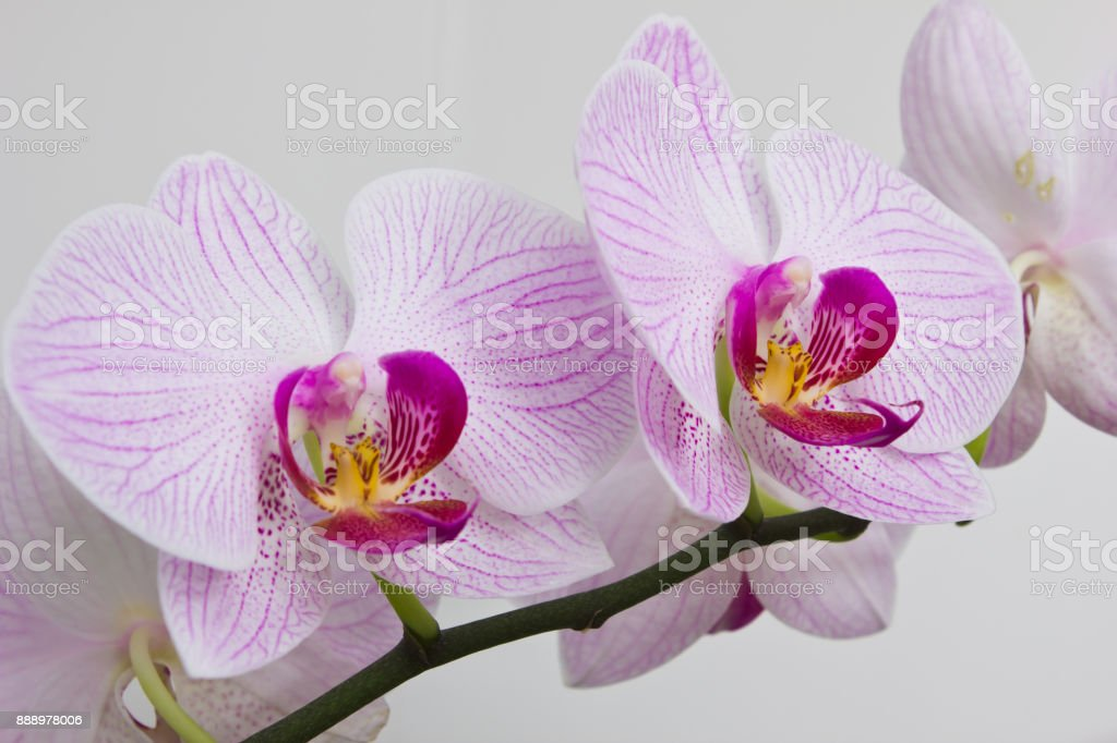flowers orchids stock photo