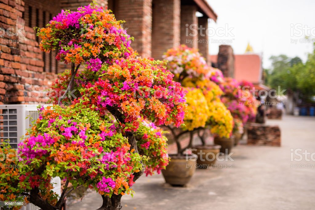Flowers Outdoors In Ayutthaya Phra Nakhon Si Ayutthaya Temple Former Capital Of The Kingdom Of Siam stock photo