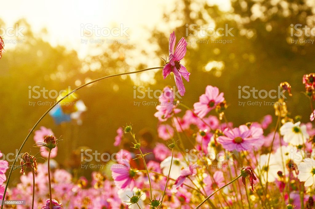 Flowers over warm sunset stock photo