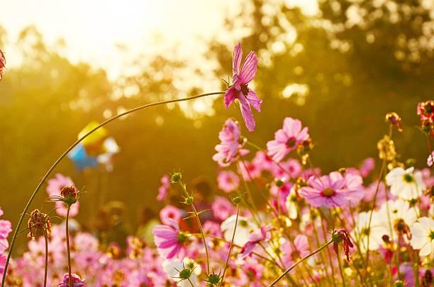 blumen auf warmen sonnenuntergang - farbfeldmalerei stock-fotos und bilder