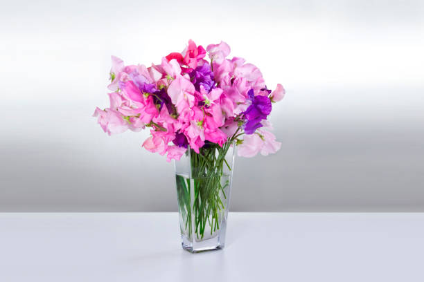 Flowers peas in vase on white table stock photo