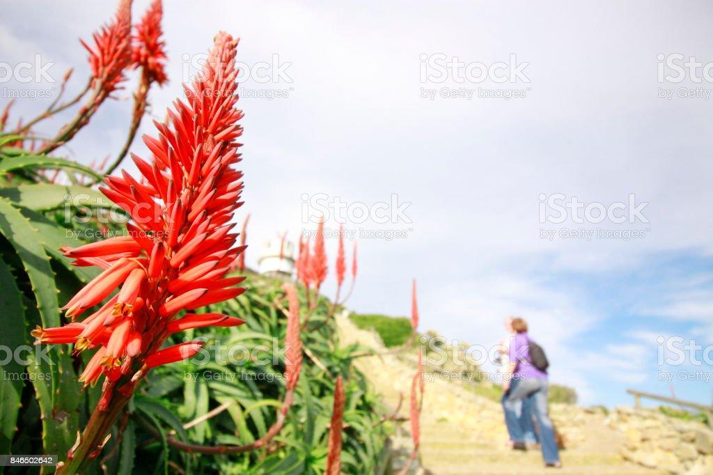 Flowers people hiking outdoor hill mountain sky aloe vera plants stock photo