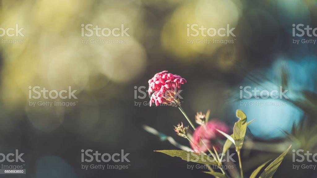 Flowers Photos 免版稅 stock photo
