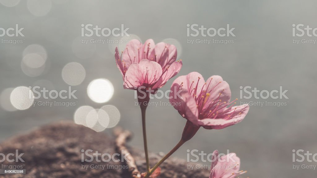 Flowers Photos stock photo