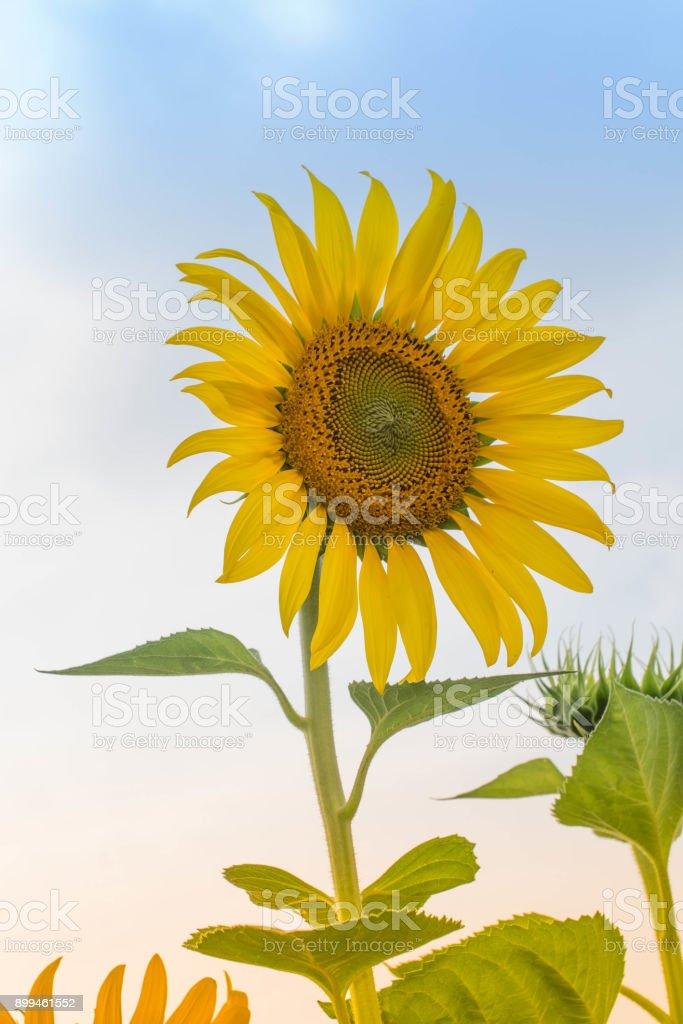 Blumen Fotos – Foto