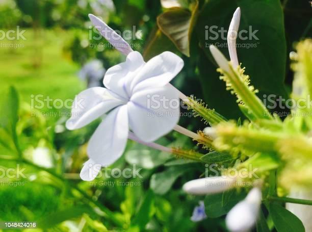 Flowers picture id1048424016?b=1&k=6&m=1048424016&s=612x612&h=syyxva1rywt9r9nzg49eyxiynu2hvnsrqulz3b53nss=