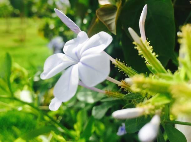 Flowers picture id1048424016?b=1&k=6&m=1048424016&s=612x612&w=0&h=l u7kjj5irz6xuqie8dojwppsy s2ffd3taac310 pg=
