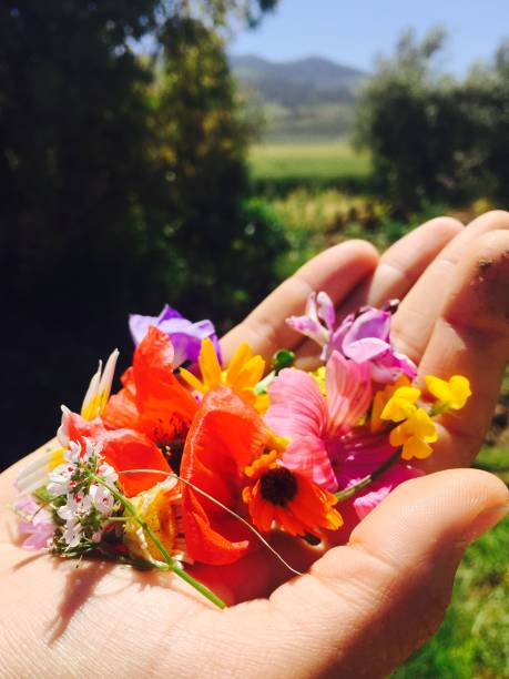 Flowers picture id1048426214?b=1&k=6&m=1048426214&s=612x612&w=0&h=vc1 sudt5n 3 jqfmvdn76de4t1rdxwyix3wvrprfh8=