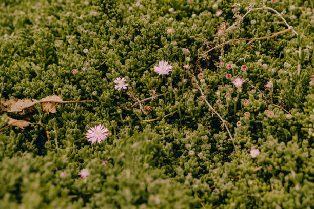 Flores - foto de stock