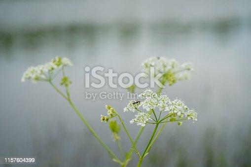485413653istockphoto Flowers 1157604399