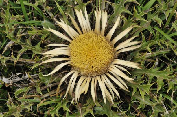Flowers picture id1285636734?b=1&k=6&m=1285636734&s=612x612&w=0&h=lp9jtywsqztujlyu4mqjg0wd8nvhikfpnwmfaeyk2ei=