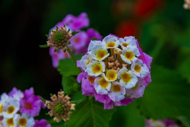 Flowers picture id1285636798?b=1&k=6&m=1285636798&s=612x612&w=0&h=hkpf8s78geij anuxhch9ws2cgpez8kmjb2dos1dgho=