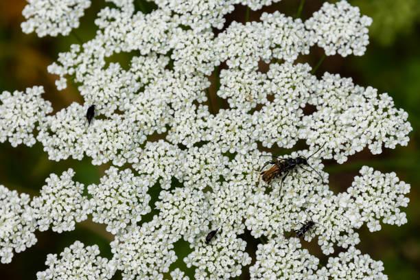 Flowers picture id1285636803?b=1&k=6&m=1285636803&s=612x612&w=0&h=zp7ivjfdkec2wa9gmrlomtnjij8ubfdjtqt5grunc7e=