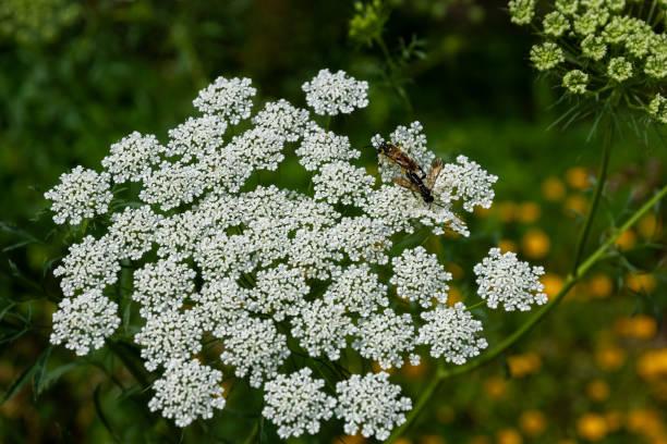 Flowers picture id1285636822?b=1&k=6&m=1285636822&s=612x612&w=0&h=wkxmxvcuw4zohzdj2rxsnabfkmz1regbt9um8pb5p7i=