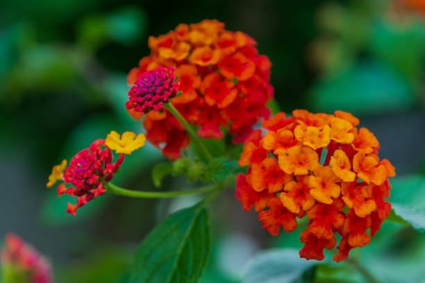 Flowers picture id1285636831?b=1&k=6&m=1285636831&s=612x612&w=0&h=xkppc7g8hlqrytqplbwywult8utok6touqsiezuwpka=