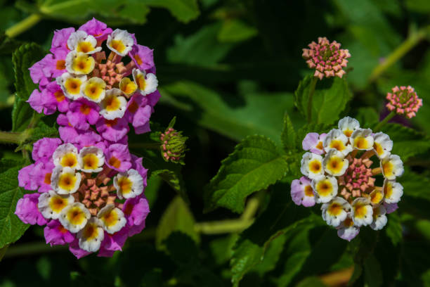 Flowers picture id1285636846?b=1&k=6&m=1285636846&s=612x612&w=0&h=w8trpkpyvooajsoc3tkumiqq xyrdxooajrsudufees=