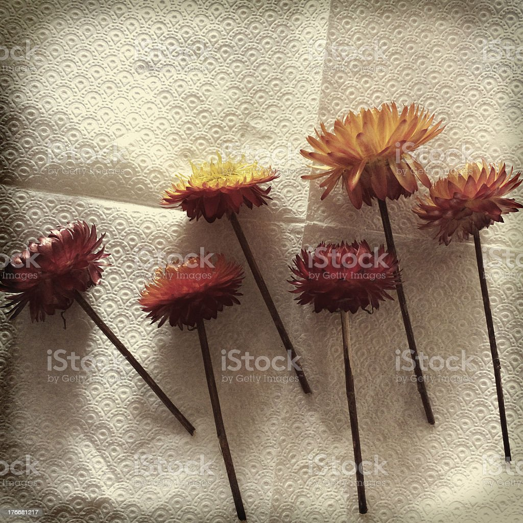 Flowers. royalty-free stock photo