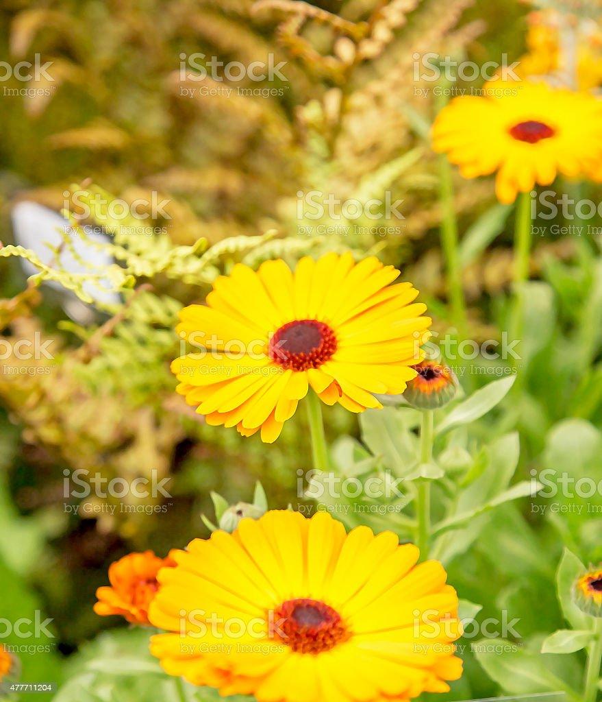 Flores - foto de acervo
