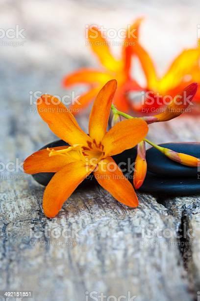 Flowers picture id492151851?b=1&k=6&m=492151851&s=612x612&h=an59v9md03slbwzdlqxw8w7znnct3xsls5spcz2j8f4=