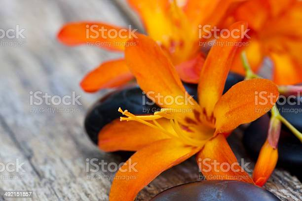 Flowers picture id492151857?b=1&k=6&m=492151857&s=612x612&h=dfehvy8swhdyuyu62dbzvbwt2gl3gjlq0 apyhsr4 e=