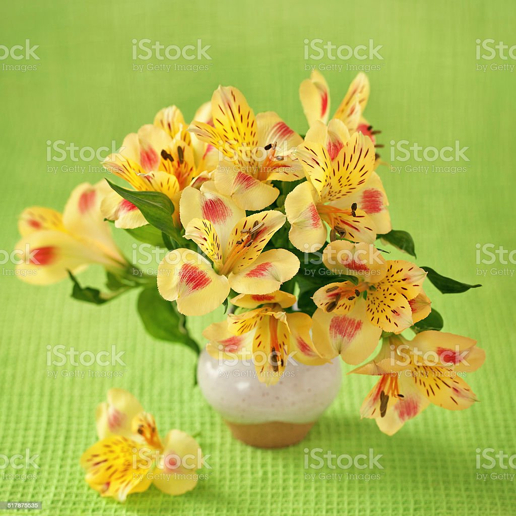 Blumen Lizenzfreies stock-foto