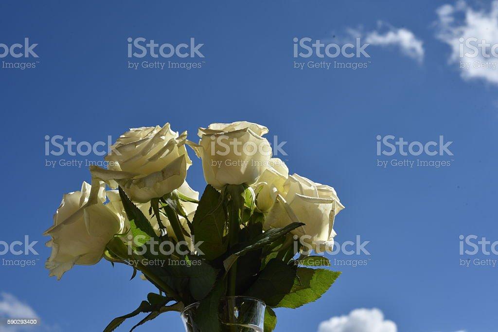 flowers royaltyfri bildbanksbilder