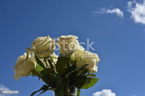 Flowers-foton och fler bilder på Blomma