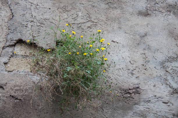 flowers - batalina italy стоковые фото и изображения