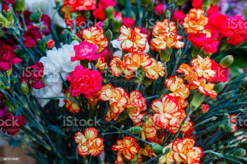 flowers foto stock royalty-free