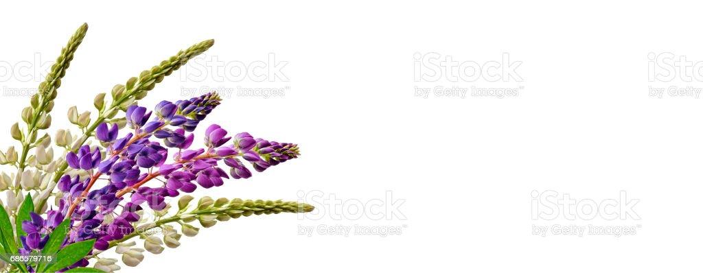 flowers photo libre de droits