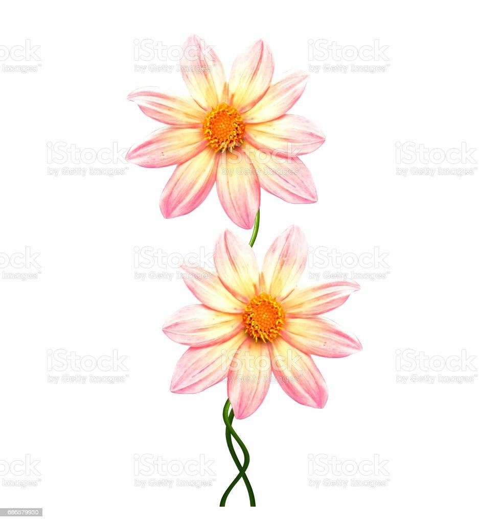 Flowers ロイヤリティフリーストックフォト